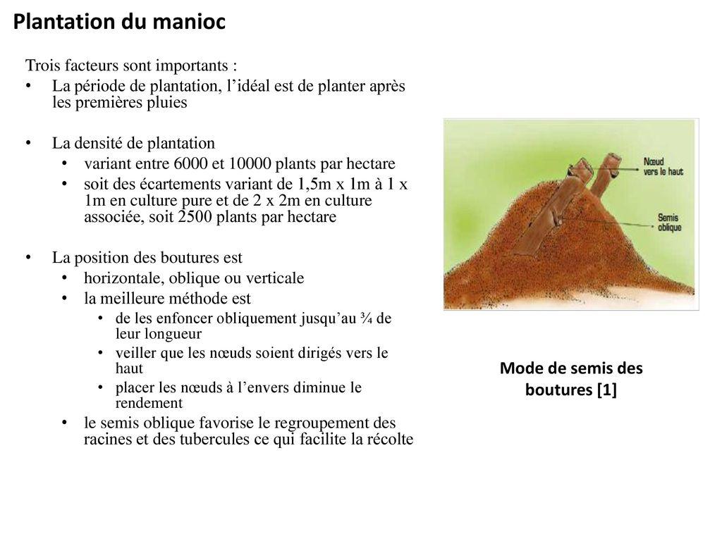 module production du manioc ppt t l charger. Black Bedroom Furniture Sets. Home Design Ideas
